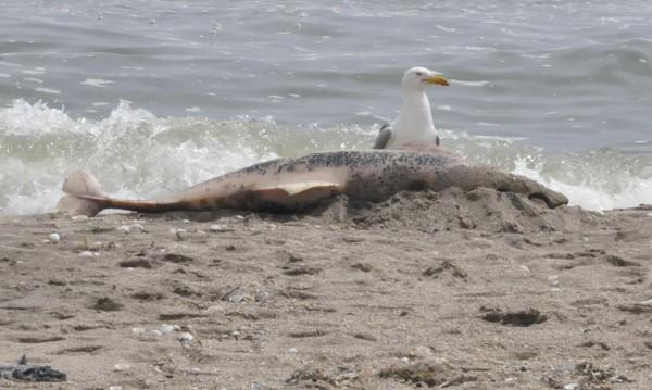Делфини измират, властите нехаят! Защо?