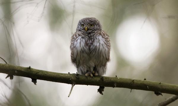 ЕК ни съди заради липса на защитени зони за дивите птици