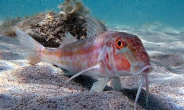 Експерти алармират: Рибните запаси намаляват