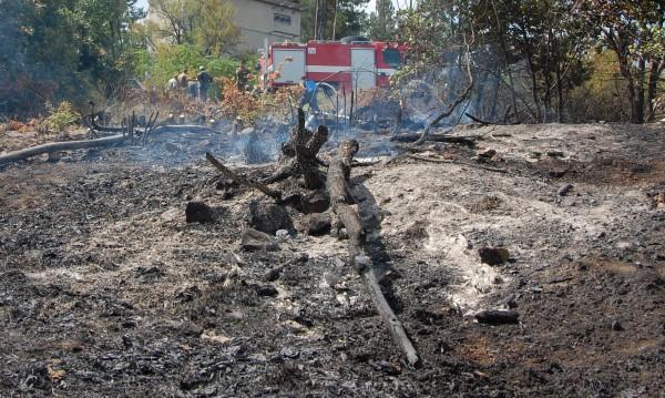50 декара лозя изгоряха край Свиленград
