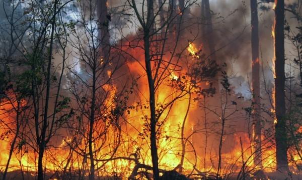 Трима задържани за пожара в Сакар планина