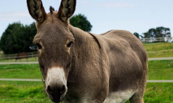 Закон и ред в Шумен: Арест за магаре нарушител от Добрич