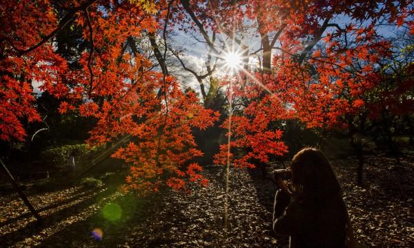 Очаква се тази есен да бъде по-топла
