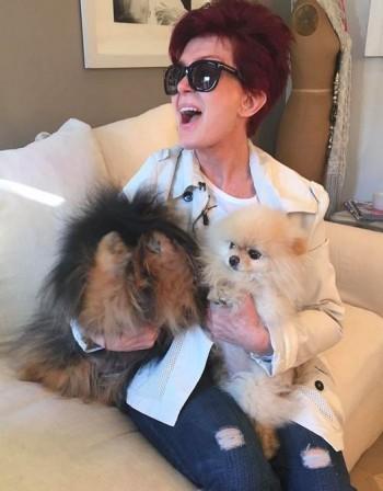 Шарън Озбърн пръска по £230 хил. за първа класа на кученцата й