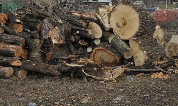 Горски задържаха бракониер с големи количества дървесина