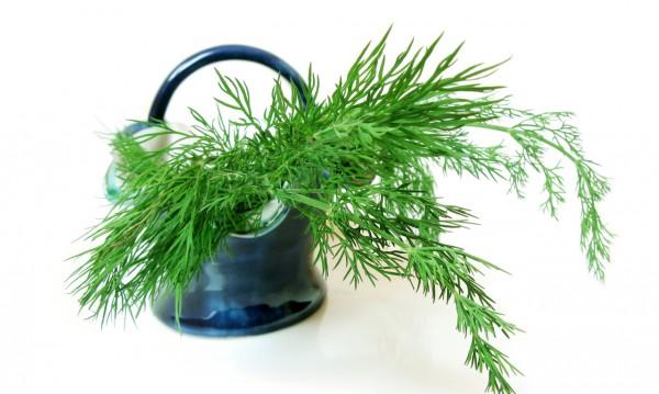 Полезни билки, които стимулират кърмата
