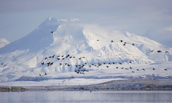 Знаете ли, че... Аляска е щатът с най-голям брой изнасилвания?