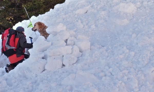 40 души с кучета дирят затрупания от лавина на Рила