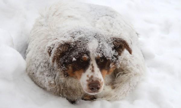 По метър сняг в планинските села в Габровско