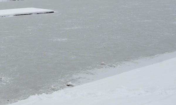 Ледоход се появи в нашия участък по Дунав