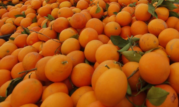 Тунис е заринат от портокали, само 10% са за износ