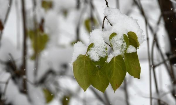 След ледената епоха – южняк и положителни градуси