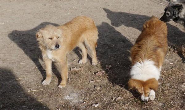 Търсят се ... одеала за кучкарника във Велико Търново
