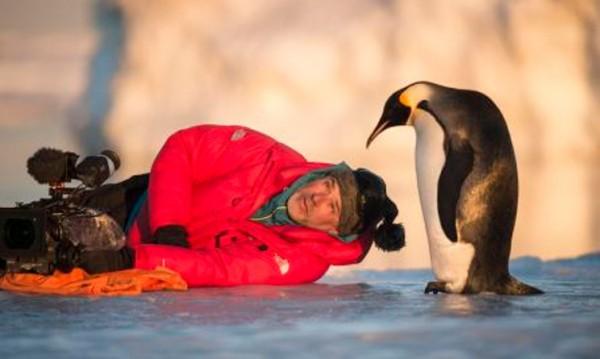 """Животът на пингвините и в """"Императорът"""""""