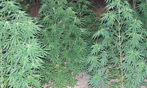 "Хванаха македонец с 160 кг марихуана на ГКПП ""Златарево"""