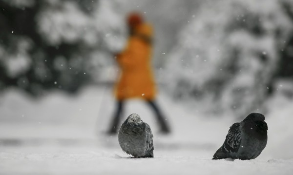 И топло, и студено. Февруари – месецът на контрастите