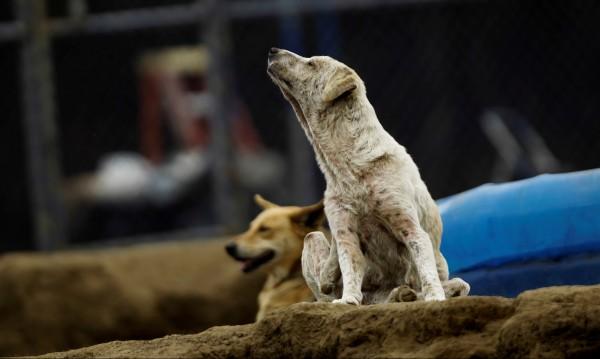 Безработен рови в кофите, за да храни бездомни кучета