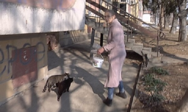 Глоба за пенсионерка в Стара Загора – хранила улични кучета