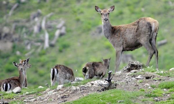 В Попово търсят убиец на елени, проверяват ловни карабини
