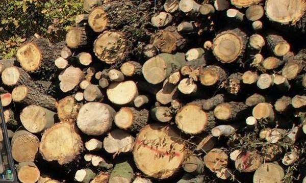 Роми нападнаха с камъни горски заради незаконна сеч