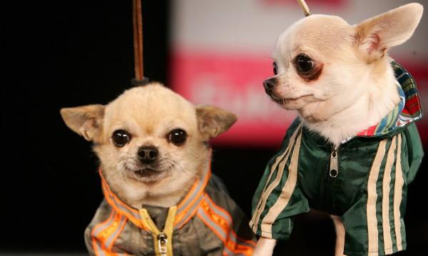 Задигнаха 8 породисти кученца от зоосклад в Бургас