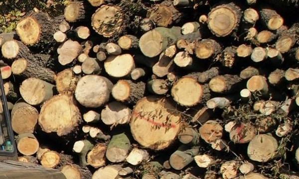 Зимата не си отива, но дървата и въглищата свършват