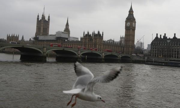 Брекзит може да засегне и чайките, били опасни