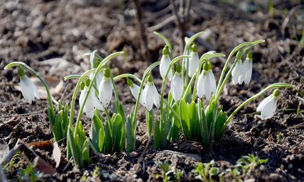 Срядата – слънчева и топла за февруари