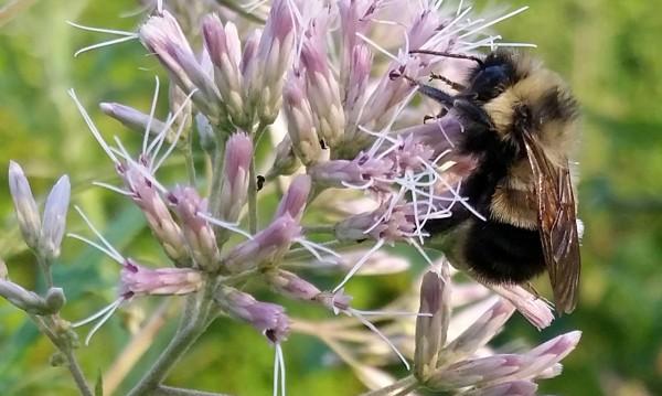 Ти ли ще ме блъскаш, твойта пчелна майка, мръсна?!