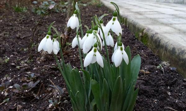 Пролетни температури и в петък, живакът скача до 21°С