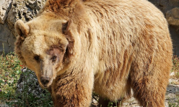 Мъж, нападнат от мечка, осъди МОСВ за 15 бона