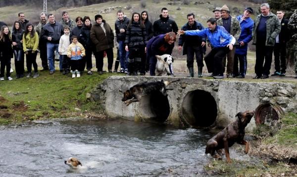 """Сблъсъци на протест срещу обичая """"тричане на кучета"""" в Бродилово"""