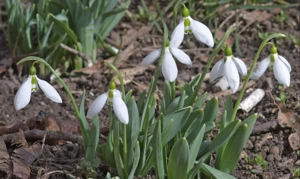"""Какво ни чака през март ли? Зимата трудно се """"дава"""""""