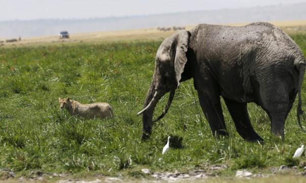 Слоновете – бозайниците, които страдат най-много от безсъние