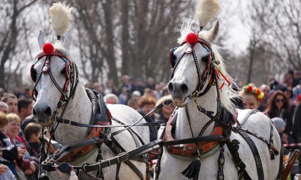 Кушии и коне: Отбелязваме Тодоровден