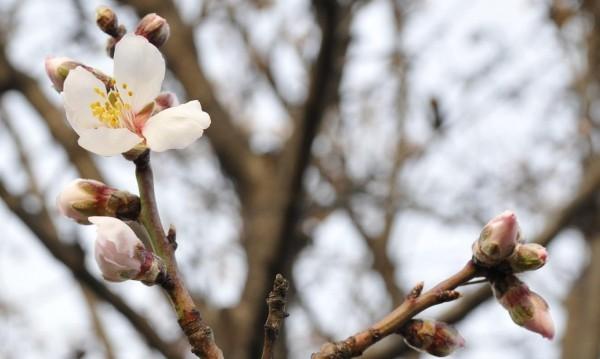 Пролетна неделя: Градусите достигат до 20