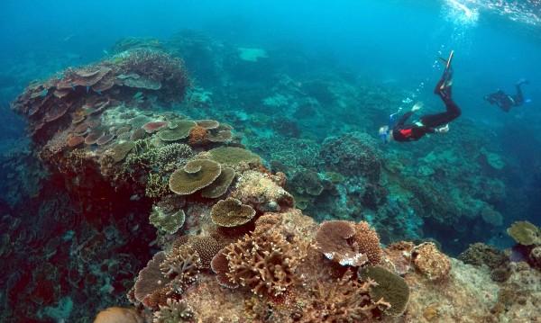 Коралите в Големия бариерен риф продължават да избеляват