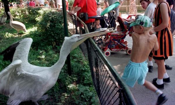 Зоопаркът във Виена остана без пеликани заради птичи грип