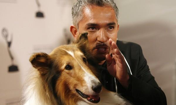 Сизър Милан: За разлика от хората, кучетата обичат безусловно!