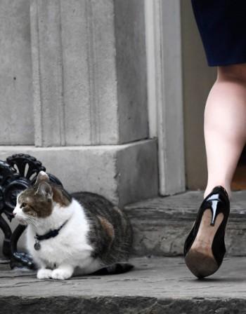 Заболяване може да причинява привързаност към котки