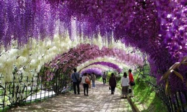 Цветен тунел в Япония привлича хиляди туристи