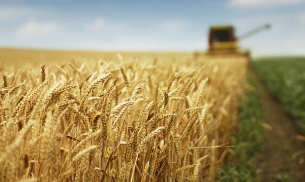 Българско дружество стартира отдаване на земя под наем с търгове