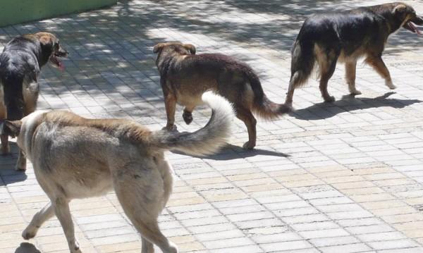 Междусъседска драма свърши с присъда – спорът за кучета