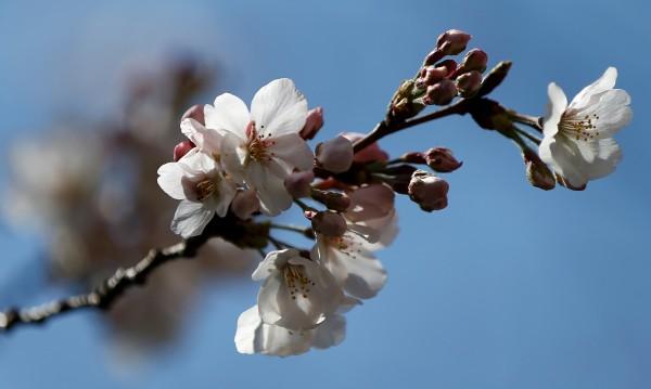 Пролетта настъпва! Температурите днес – до 25°С