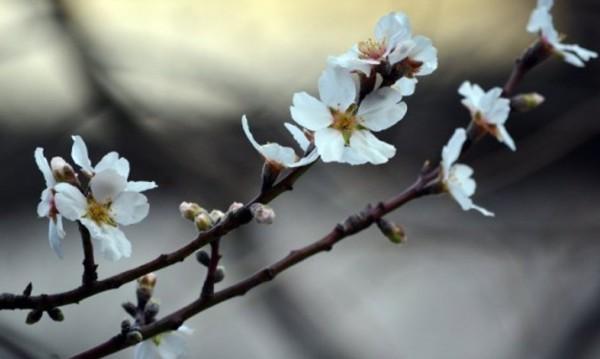 Пролетни температури, но се заоблачава