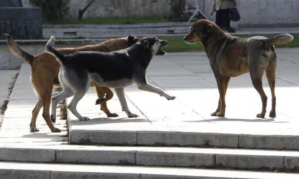 10 000 лв. обезщетение за нападната от кучета жена