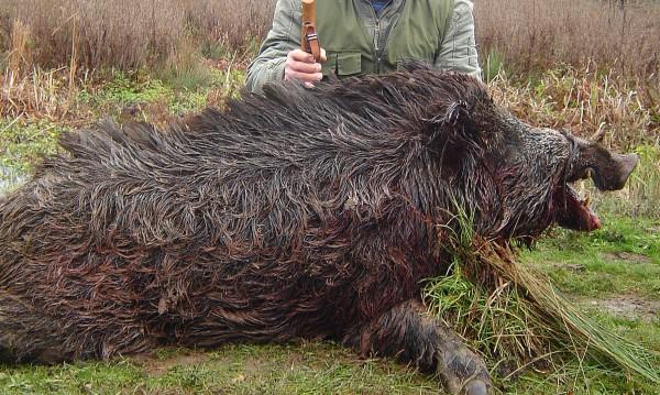 6 млн. лева са приходите от ловен туризъм