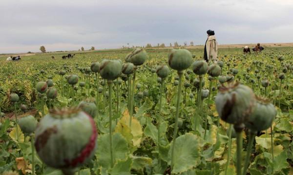 Шестима уволнени от посолството на САЩ в Кабул заради дрога