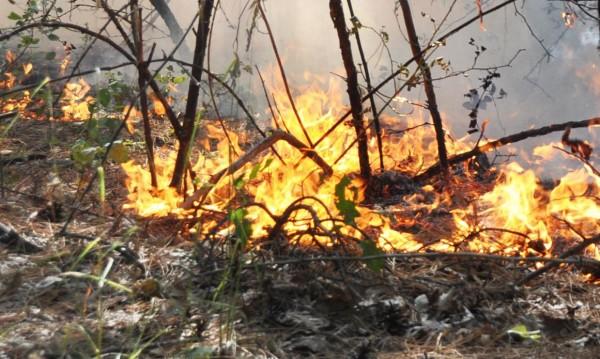 Голям пожар гори край Елин Пелин