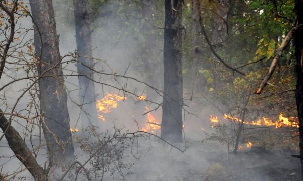 40 декара гори пламнаха край Копривщица